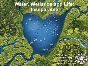 Green Protocol for Wetlands